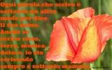 Frasi e poesie celebri per la Mamma