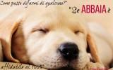 Frasi e cartoline belle sui cagnolini