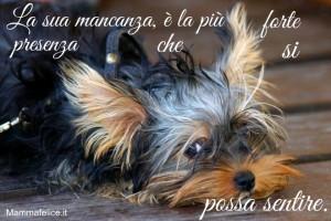 frasi-belle-sui-cagnolini-la-sua-mancanza