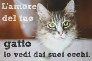 frasi-belle-sui-gattini-il-suo-amore