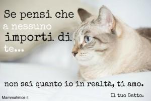 frasi-belle-sui-gattini-io-ti-amo