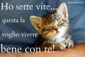 frasi-belle-sui-gattini-sette-vite