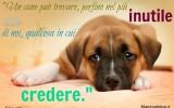 Frasi belle su cagnolini